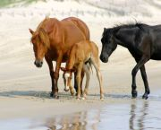 Open Air Safari Morning Tours - Back Beach Wild Horse Tours