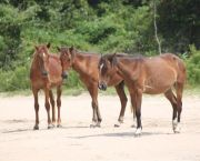 Open Air Safari Afternoon Tours - Back Beach Wild Horse Tours