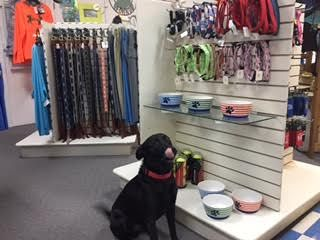 OBX Bait and Tackle Corolla Outer Banks, Dog Collars and Leashes