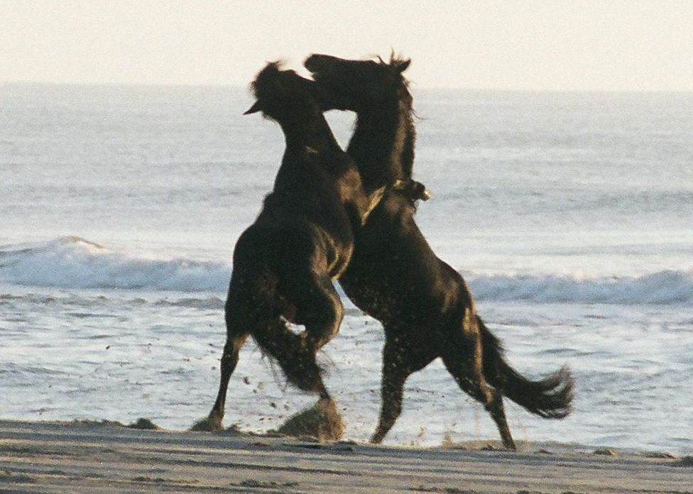 Bob S Wild Horse Tours Corolla Nc