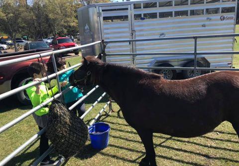 Corolla Wild Horse Museum, Meet a Mustang