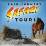 Back Country Wild Horse Safari